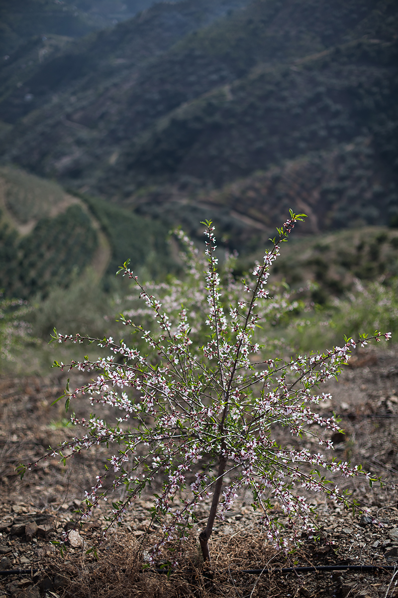Andalucia-Campo-19