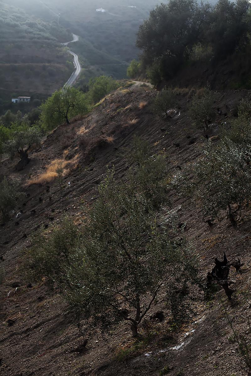 Andalucia-Campo-31