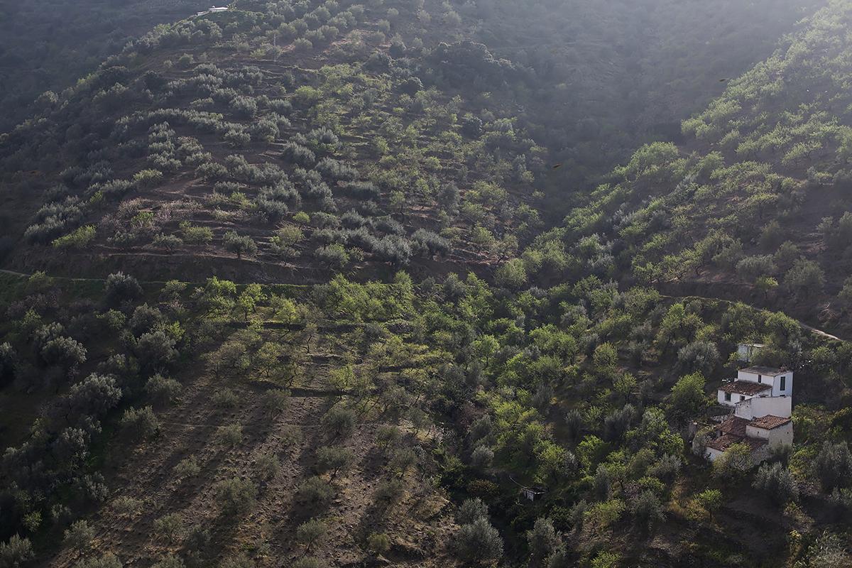 Andalucia-Campo-32
