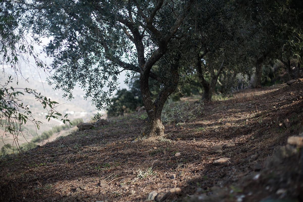 Andalucia-Campo-47